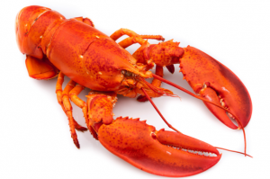 Are Lobsters Deaf?